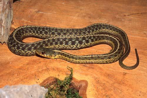 Reptile Amp Amphibian Landfall
